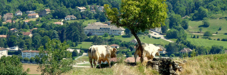 L'élevage bovin très présent sur les VDD